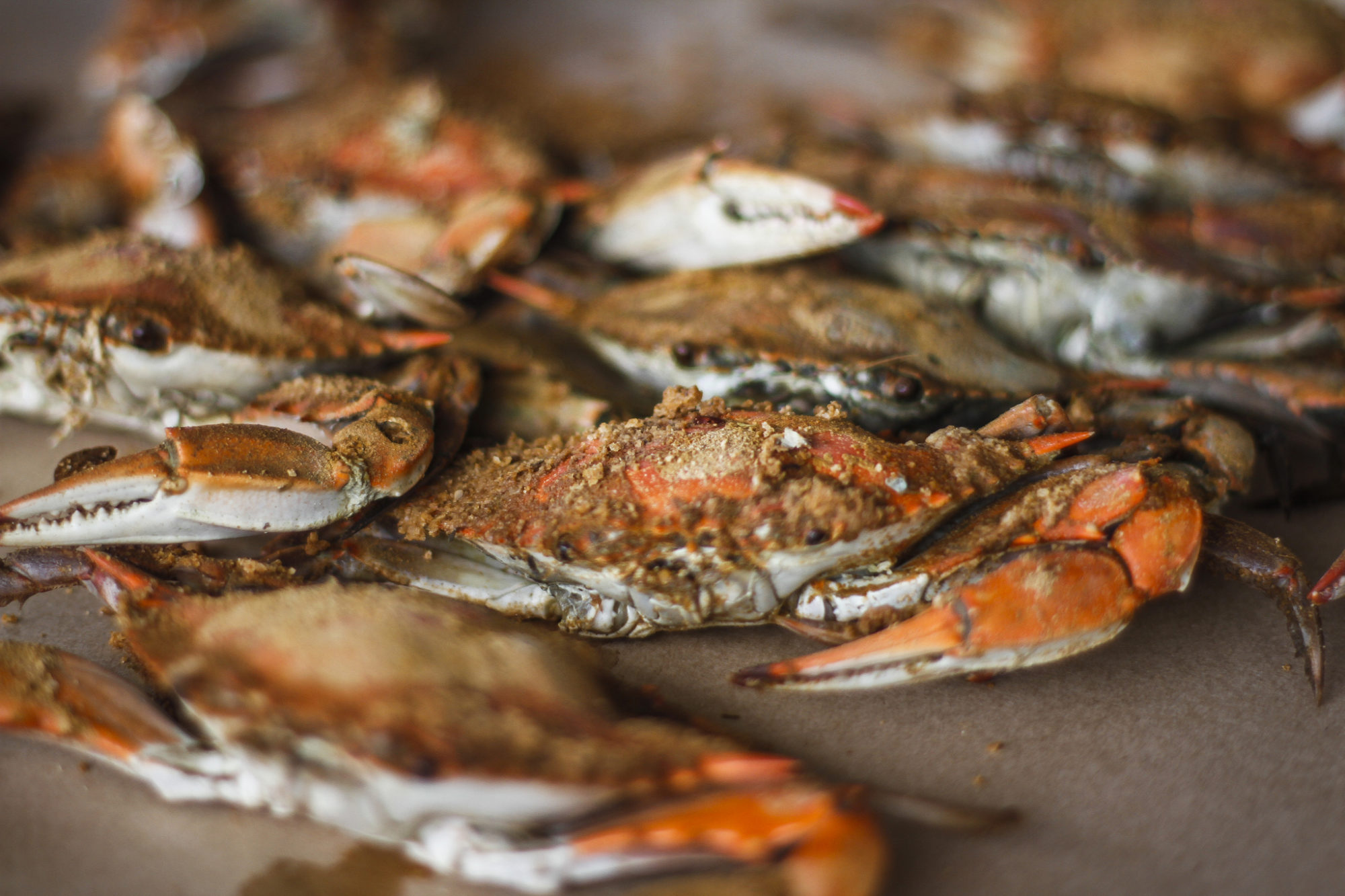 maryland crab by Pulaw via Flickr